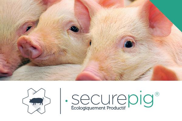 cerdo secure pig