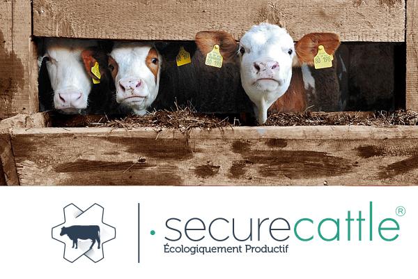 Secure-Cattle-bovino2
