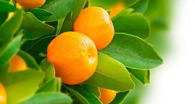 citrico Chemie